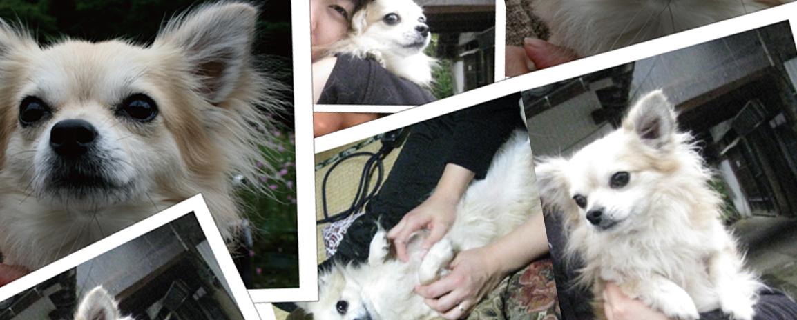 ペットクッションのある生活,ペットクッション、オーダー、プリント、猫、犬、ペット、オリジナル、プリント、写真、オーダークッション、フワフワ生地、オーダークッション